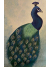 Pretty Peacock Original Painting on Canvas Panel Framed and Ready to Hang 11x14