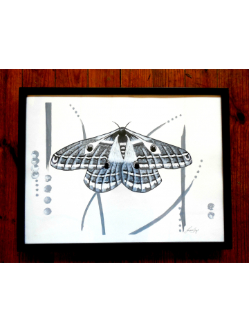 Black and White Emperor Moth Contemporary Modern Wall Art Framed 18x24